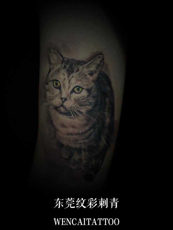 东莞帅气计先生小腿可爱的猫咪纹身图案图片